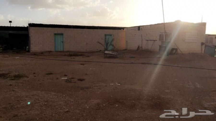 مزرعه على طريق الرياض القصيم في دقلة