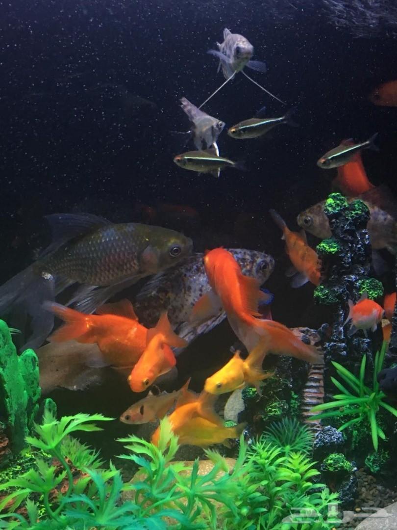 حوض سمك(تم البيع)