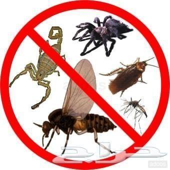 رش مبيد ومكافحة حشرات ومحاربة النمل الابيض