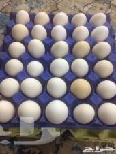بيض دجاج باكستاني ملقح