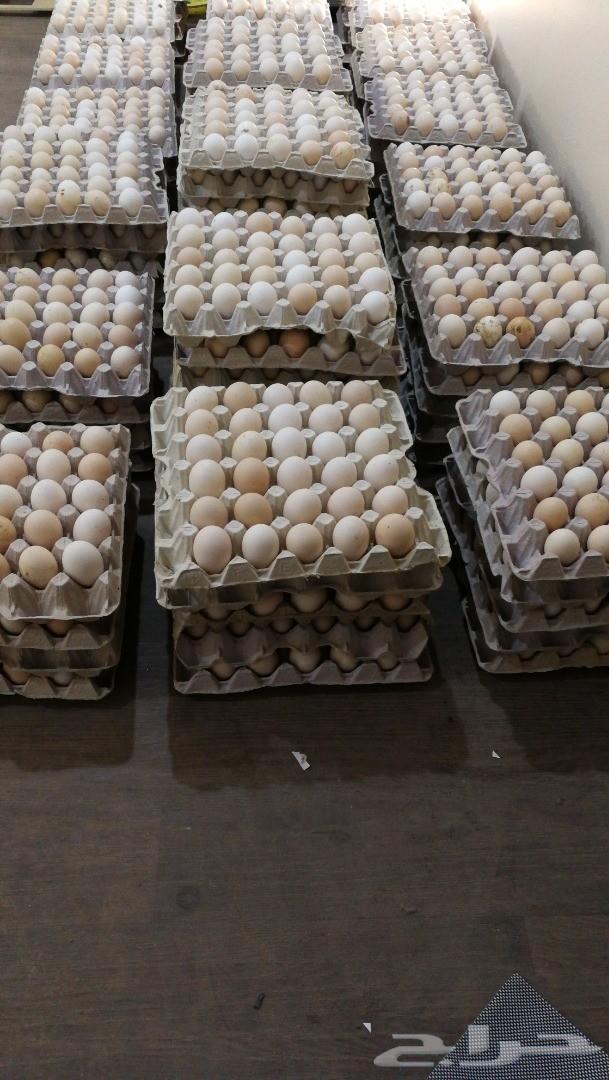 بيض بلدي مخصب وللاكل