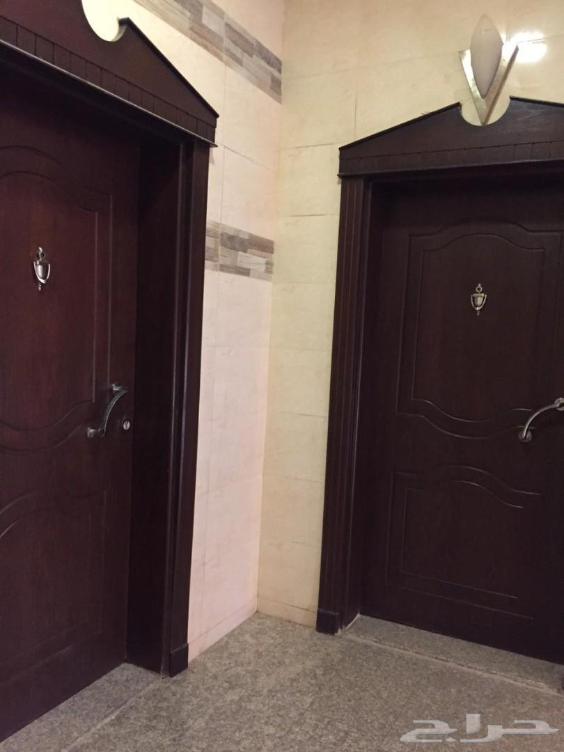 شقة للايجار في حي العريض (الربوة) خلف فاينفير