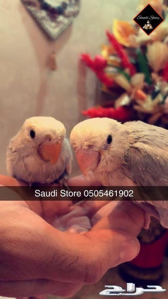 فندقة الطيور أثناء سفرك