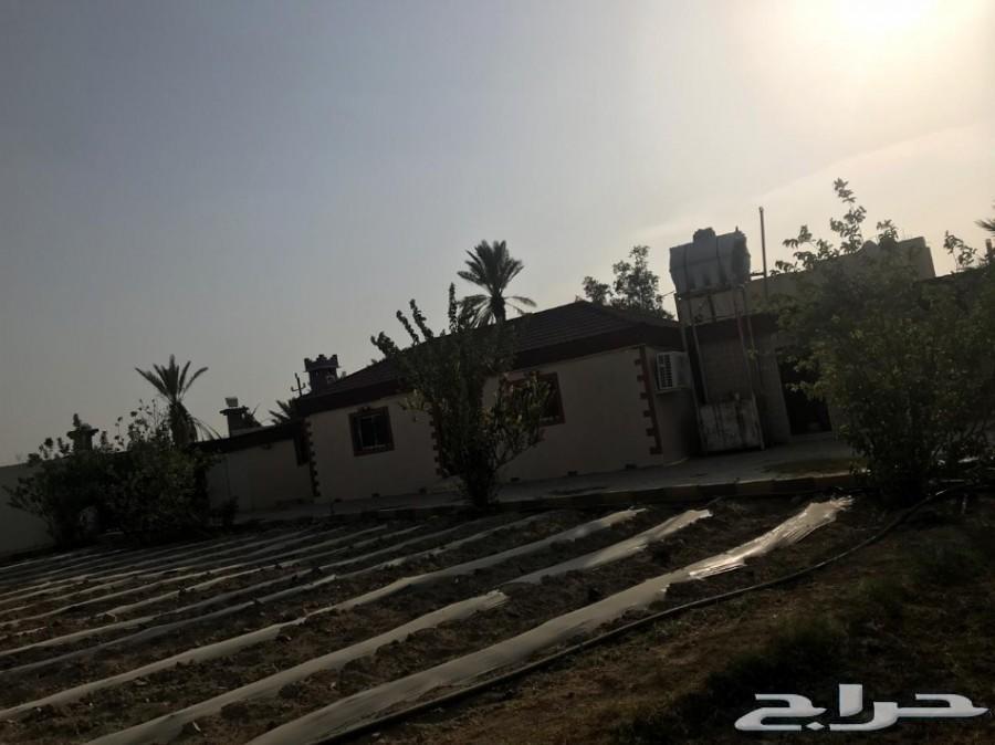 مزرعة لقطة للبيع_مساحة_3553 مدينة_الباحة