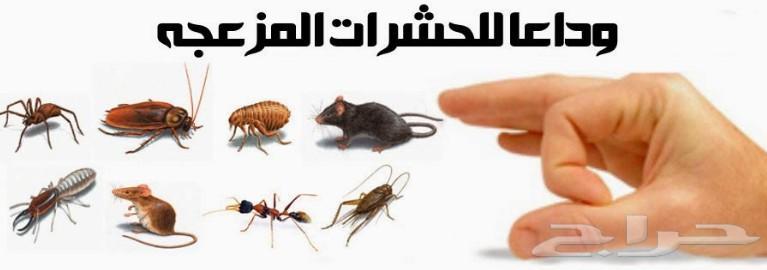 شركة رش مبيدات ومكافحة النمل الابيض بابها