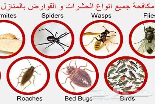 شركة مكافحة حشرات رش مبيدات