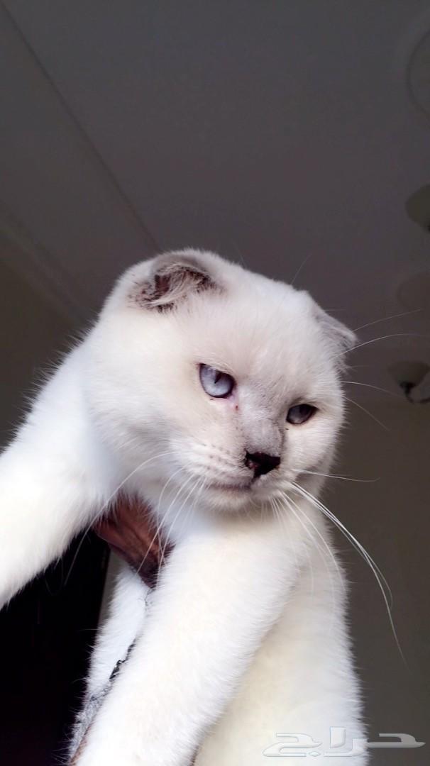 قطط متنوعة الأنواع مستويات عالية