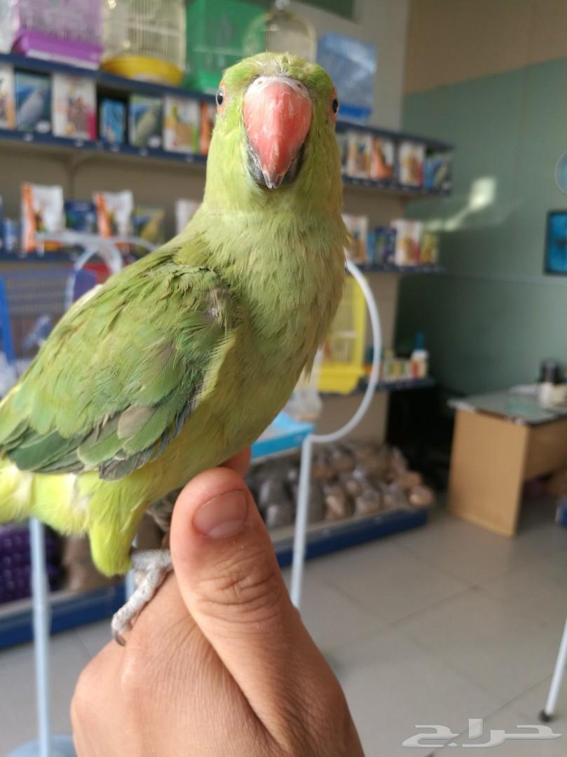 فرح أولاك مع أجمل الطيور الأليفة والمتكلمة