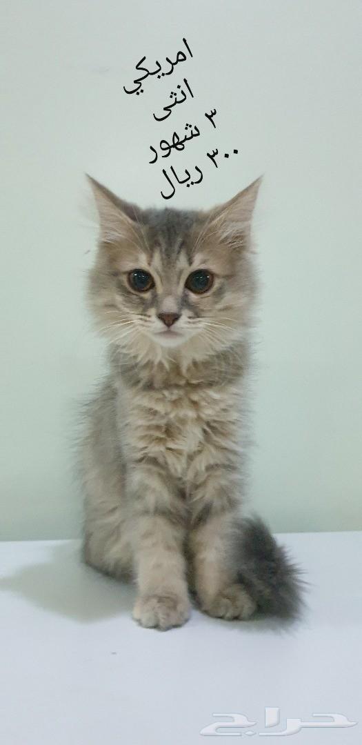 قطط صغيرة kitten