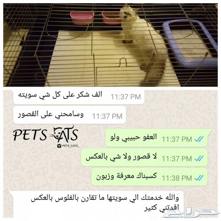 فندقة قطط جدة ومكة