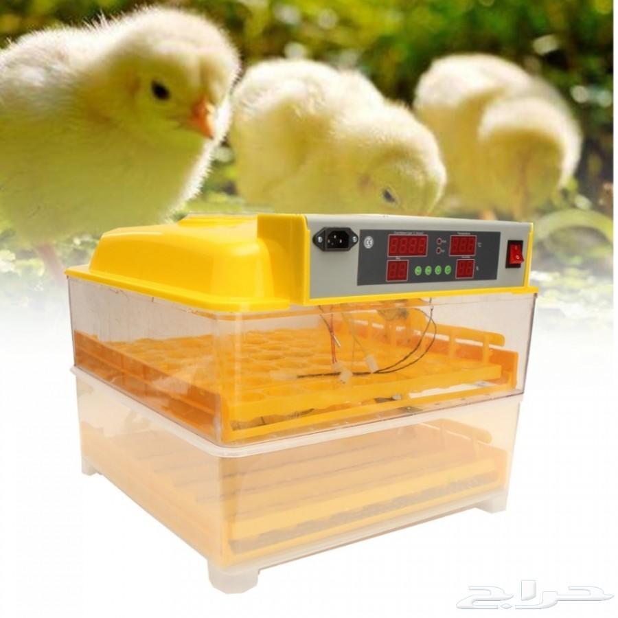 فقاسة بيض دجاج بط حمام سمان منزليه