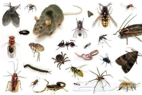 شركه رش مبيدات حشرات