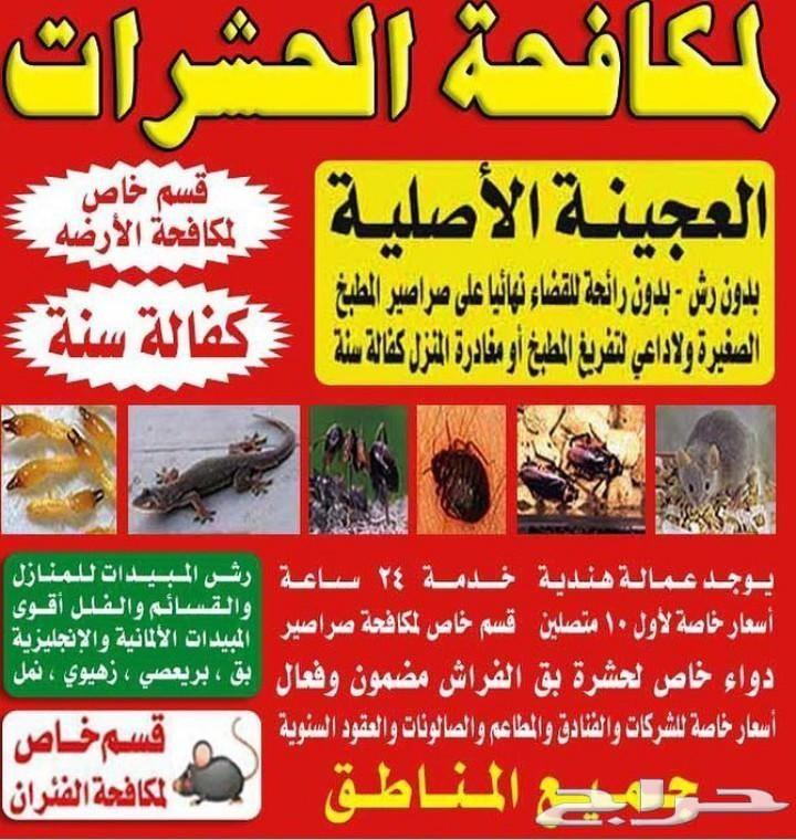 شركة رش مبيدات مع الضمان الصراصير النمل البرص