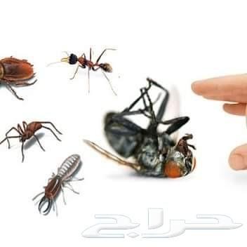 شركة رش مبيدات رش مبيد بالضمان مكافحة حشرات