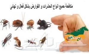 شركة مكافحة حشرات بالرياض رش مبيد بالضمان