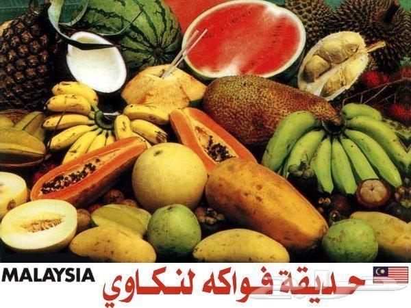 عرض عيد الاضحى 13 يوم بماليزيا لشخصين وطفلين