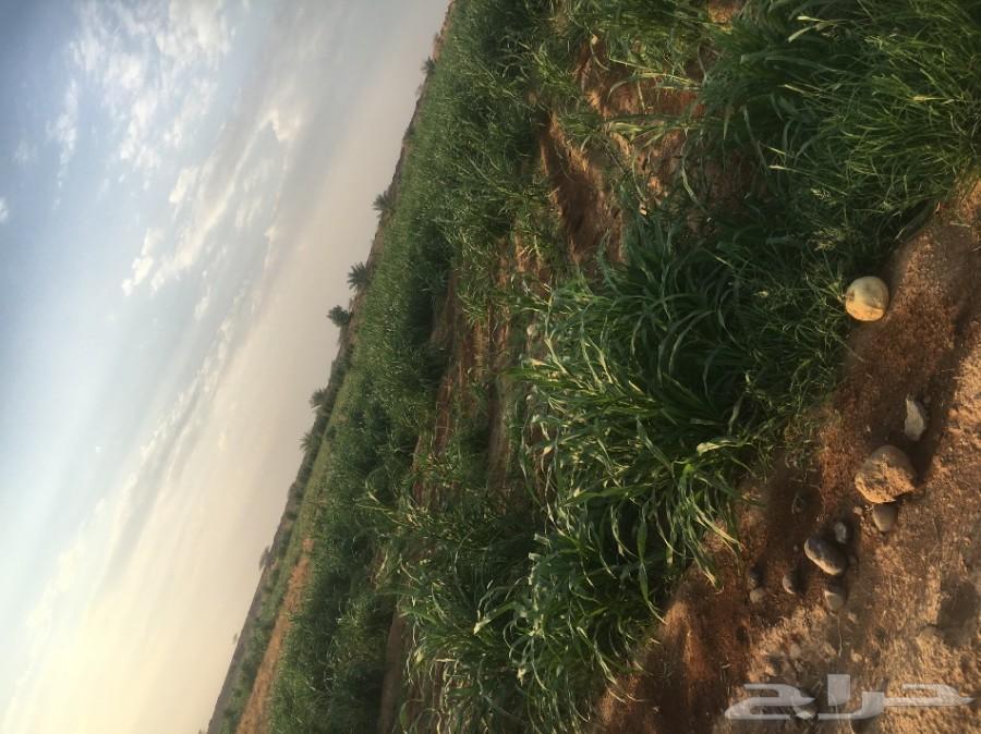 مزارع للبيع والايجاز
