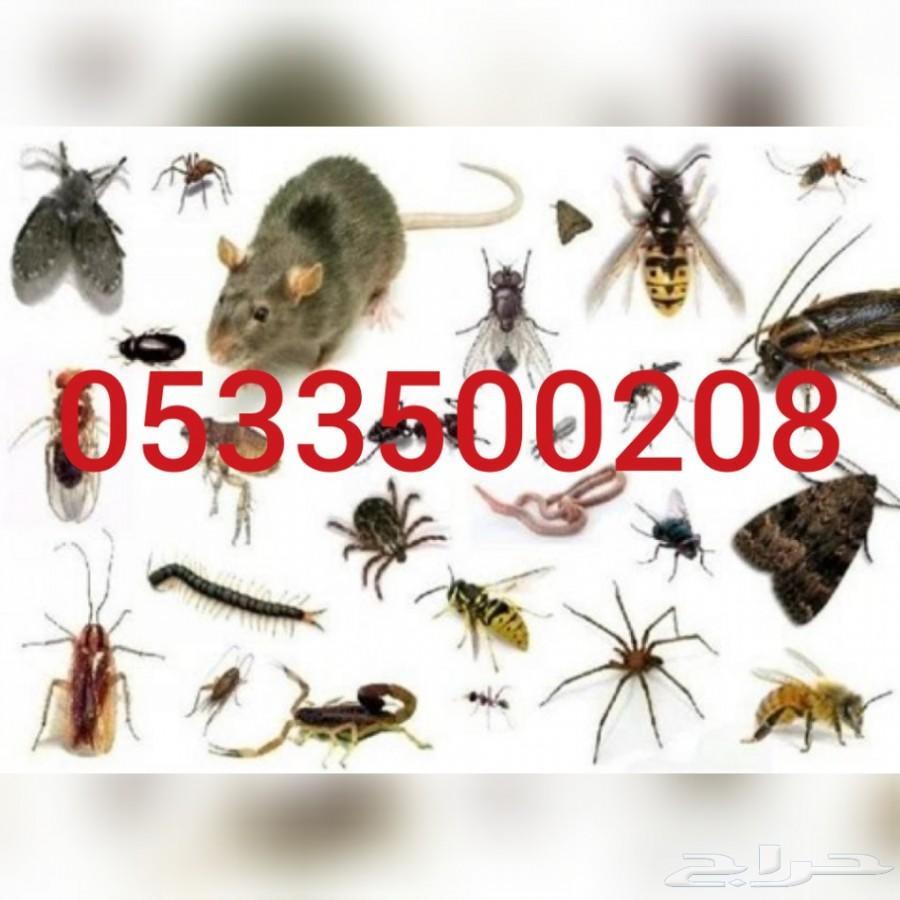 شركة رش مبيدات رش مبيد حشري مكافحة حشرات بيوت