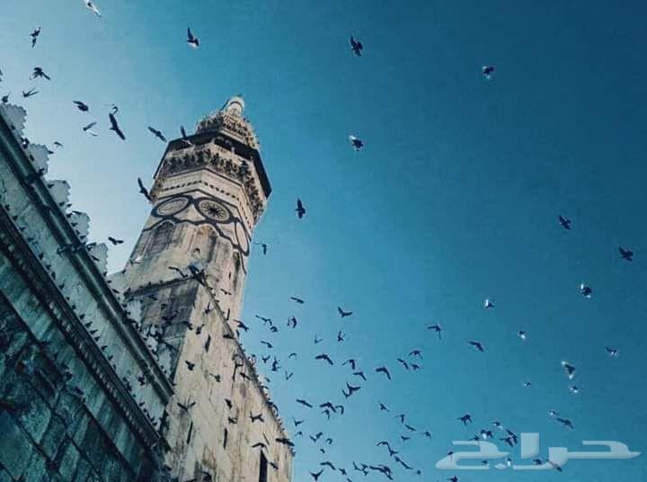 امام يبحث عن مسجد