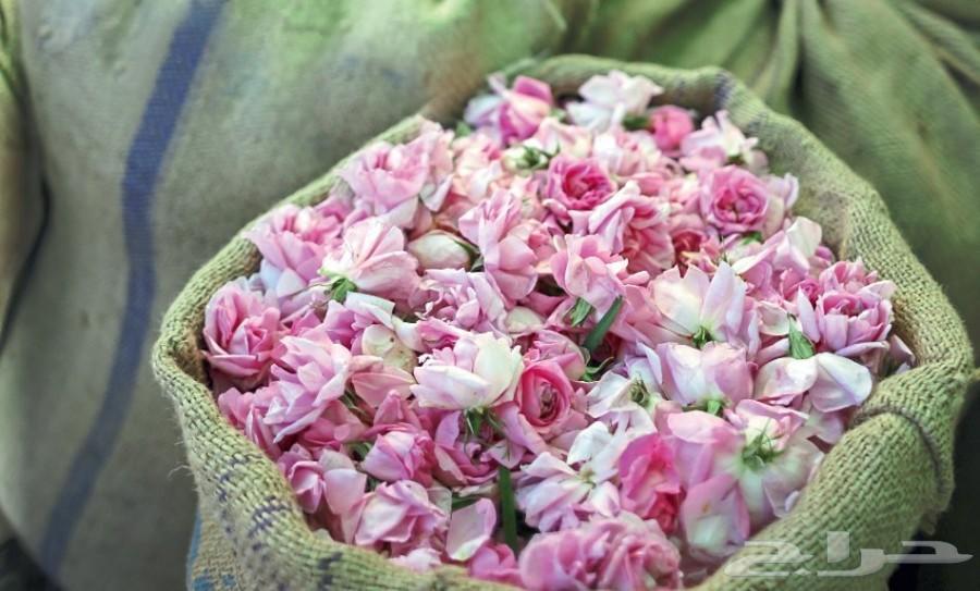 الورد الطائفي