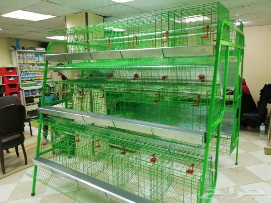 بطاريات دجاج بياض ومخصب