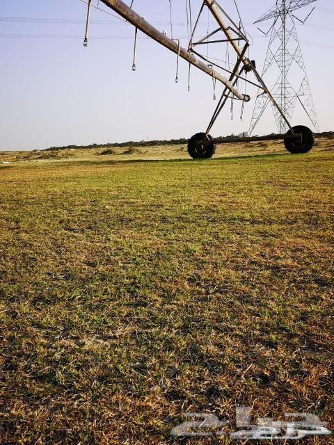 فرصة للمستثمرين مزرعه للبيع