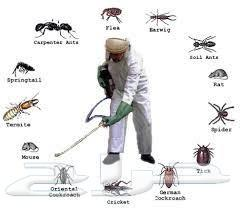 مكافحه الحشرات_رش مبيدات