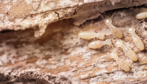 مكافحة حشرات ونمل وصراصير وفئران