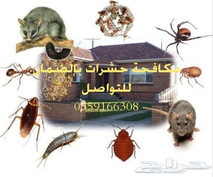 شركة تعقيم بيوت شركات استراحات مكافحة حشرات ب