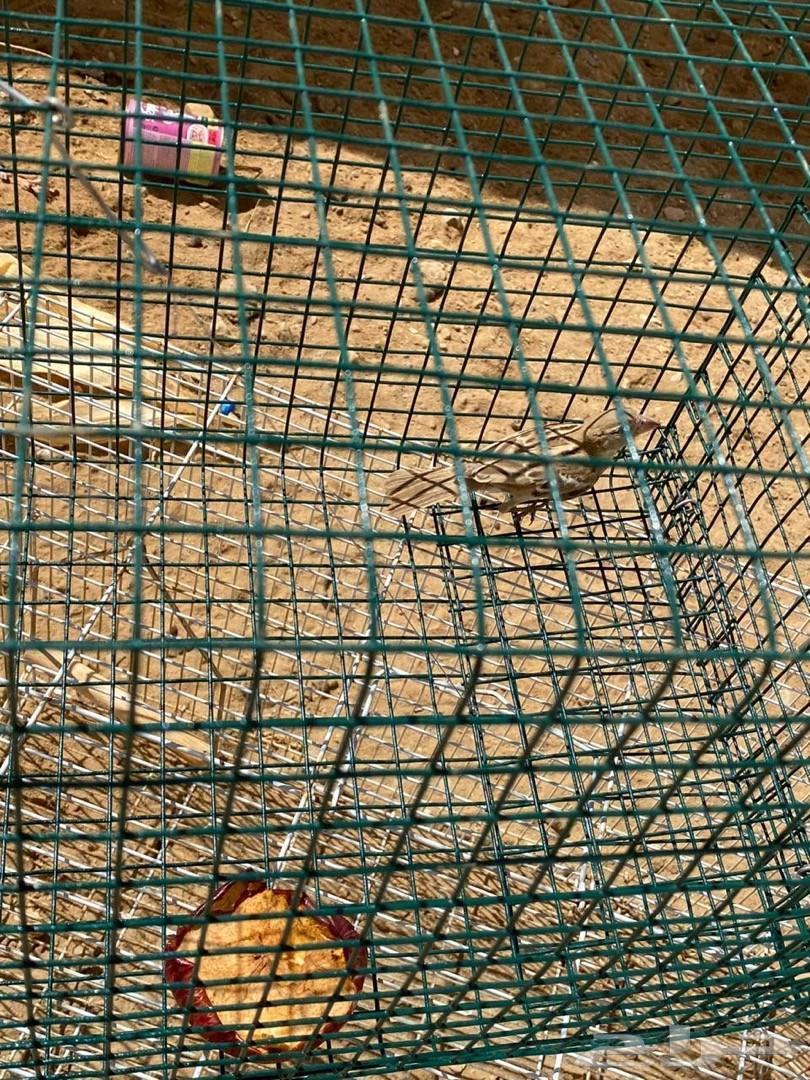 للبيع مصيدة طيور او فخ لصيد الطيور