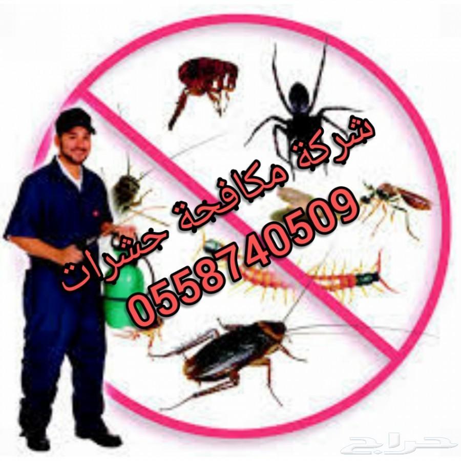 شركة رش مبيدات ومكافحة حشرات ونمل أبيض