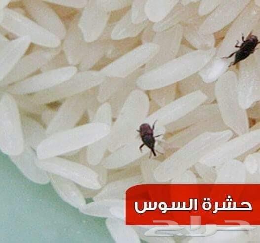 شركة مكافحة الصراصير بالمدينة المنورة بالضمان