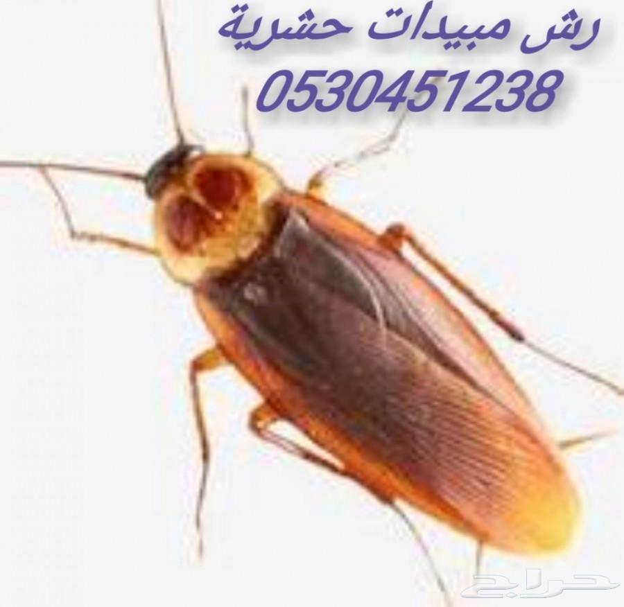 شركة مكافحه حشرات الدمام الخبر القطيف