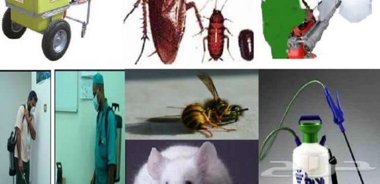 شركة مكافحة حشرات ورش مبيدات وتعقيم بالدمام