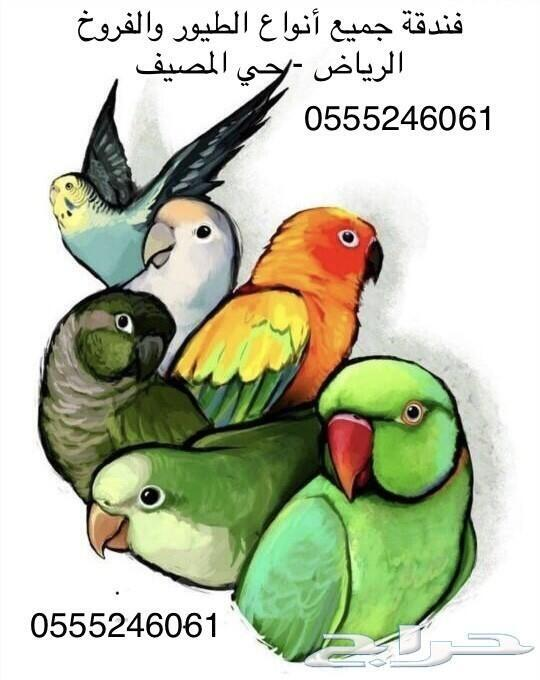 فندقة الطيور والفروخ - 36 تقييم