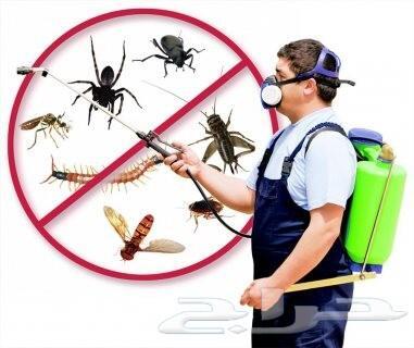 شركة مكافحة حشرات صراصير بق نمل فيران وزغ