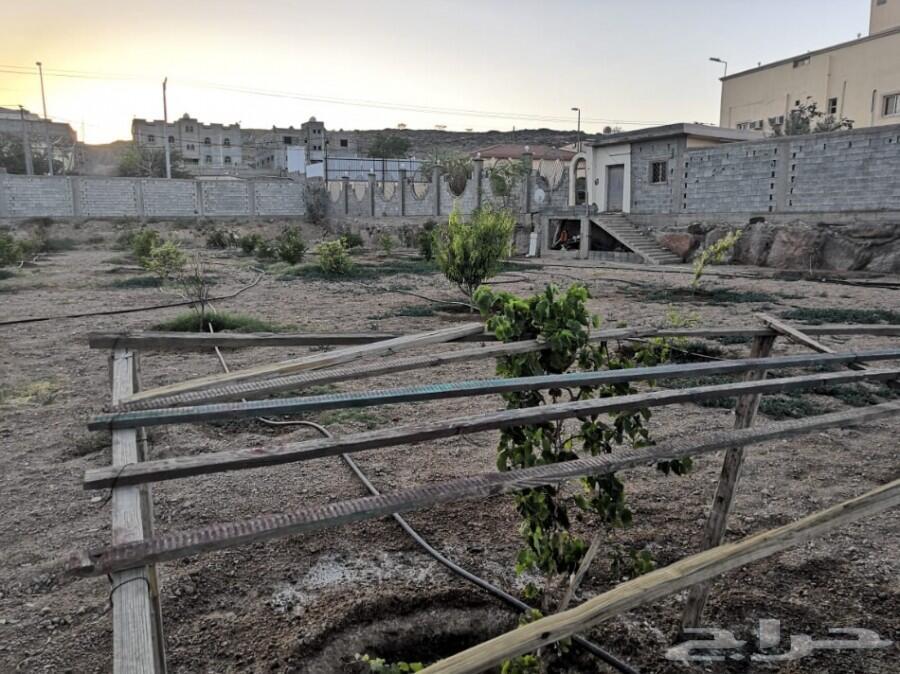 مزرعة مساحة 20 ألف بصك زراعي للبيع