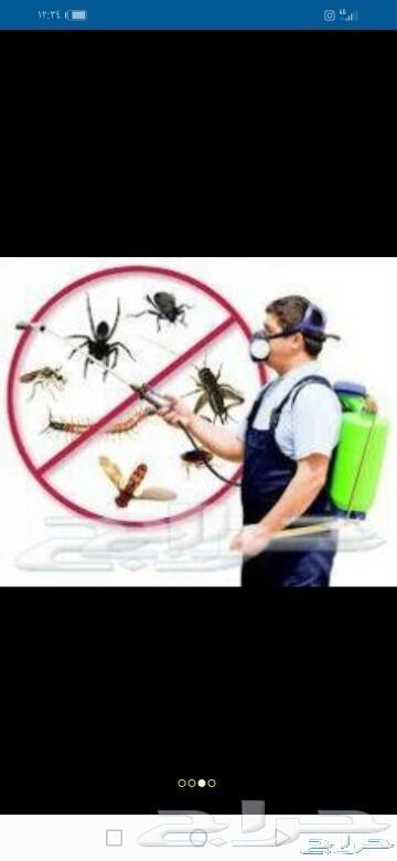 شركة مكافحه حشرات وغسيل خزانات بالمدينة المنو