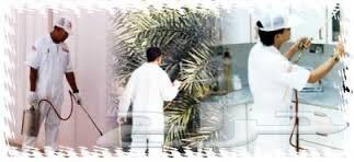 شركة مكافحة صراصير المطابخ النمل الأبيض بجده