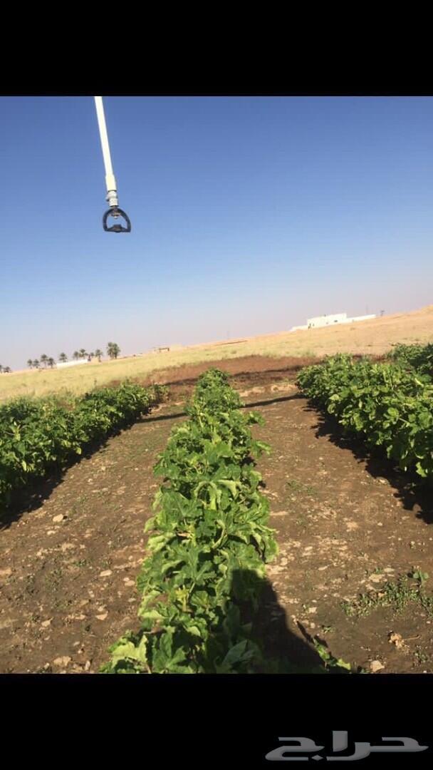 مزرعه للايجار جنوب المذنب 50 كيلو
