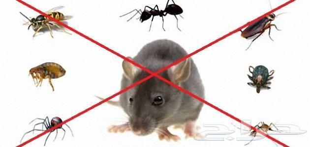 مكافحة حشرات صراصير نمل وزغ فئران بالضمان