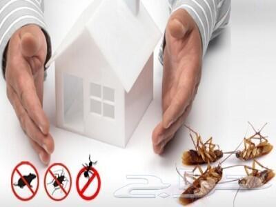شركة رش مبيدات مكافحة حشرات نمل صراصير فئران