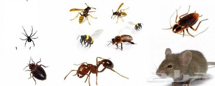 شركة مكافحة حشرات بجدة صراصير بق الفراش النمل