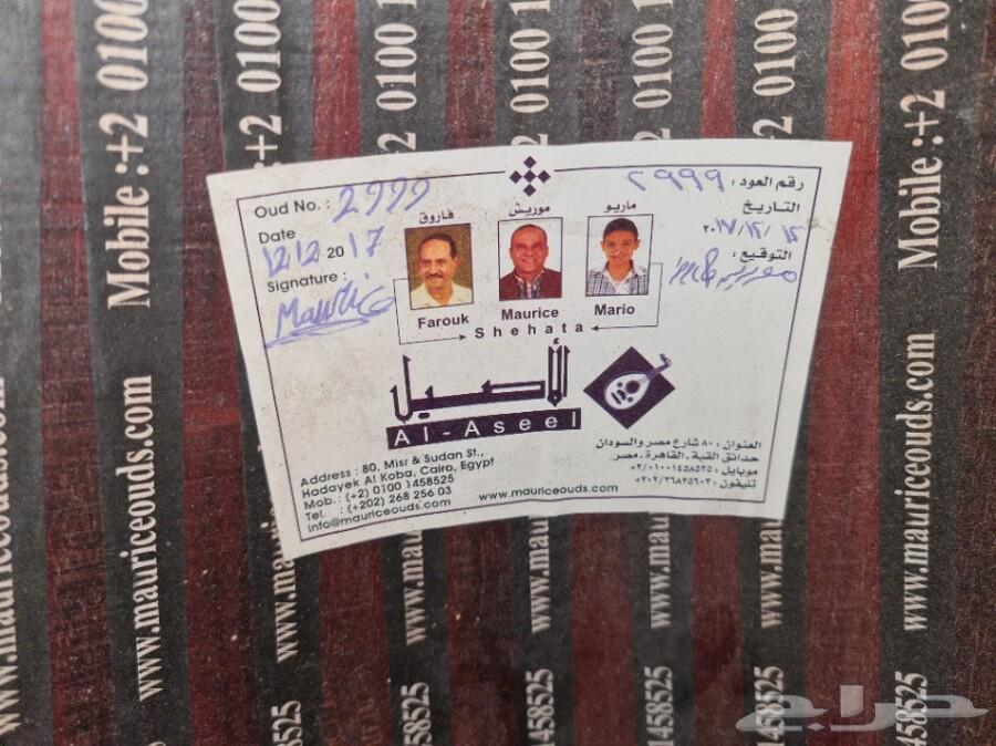 عود مصري صناعة موريس شحاته