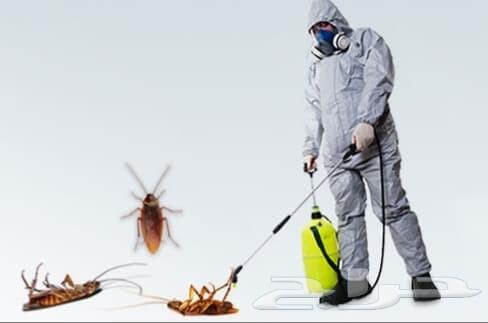 رش مبيدات صراصير نمل فئران وزغ عقارب